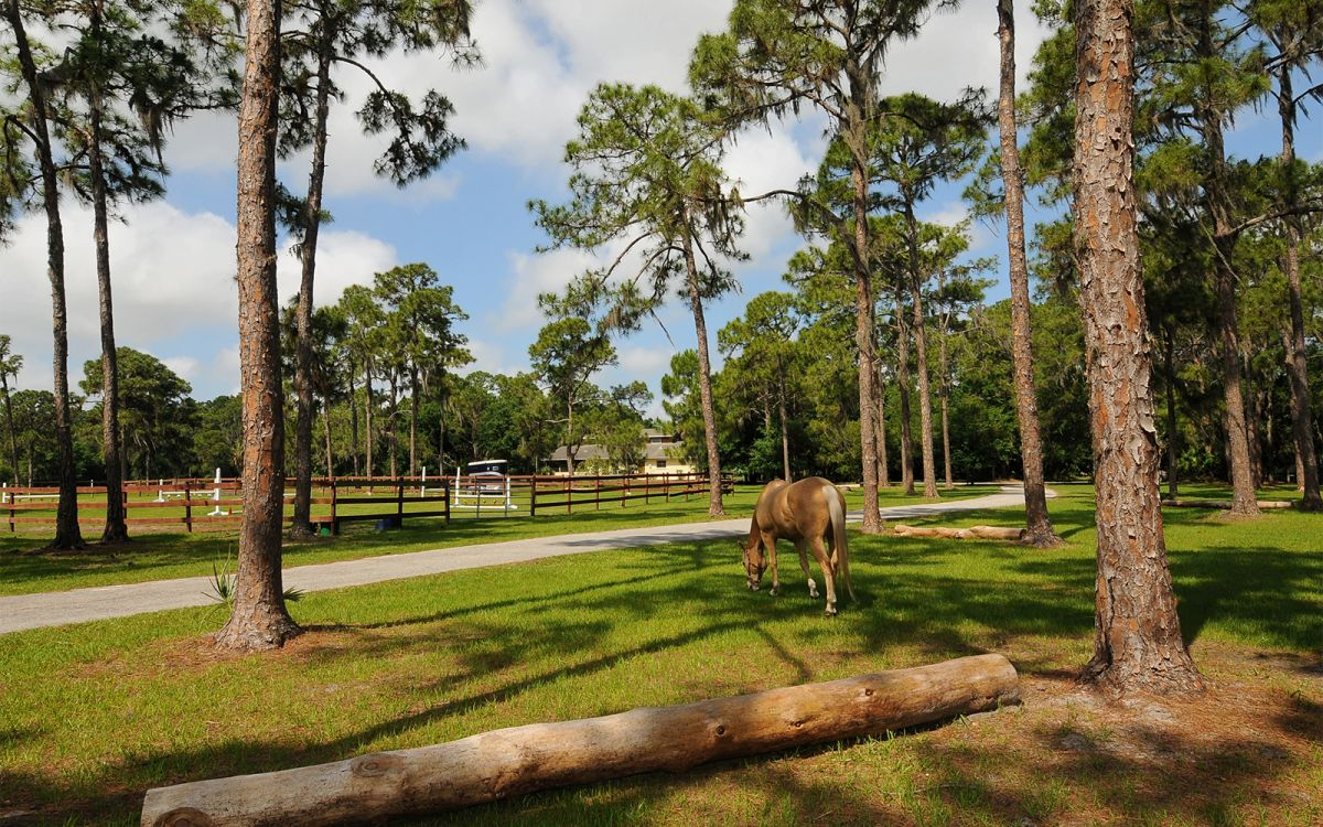 Front Entrance and Drive Way with Horse Sterling Grazing